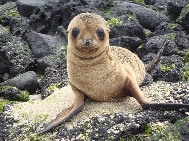 eco-tourism in Galapagos