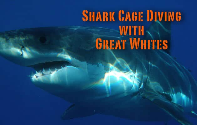 adventure with shark cage diving